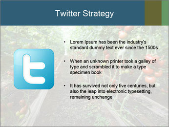 Tomatoes PowerPoint Template - Slide 9