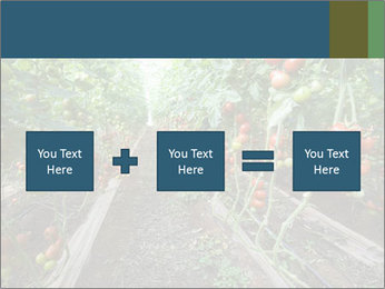 Tomatoes PowerPoint Template - Slide 95