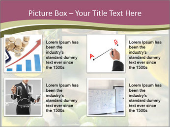 Olive harvest collage PowerPoint Template - Slide 14