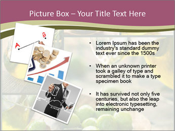 Olive harvest collage PowerPoint Template - Slide 17