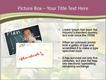Olive harvest collage PowerPoint Templates - Slide 20