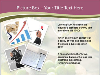 Olive harvest collage PowerPoint Template - Slide 23