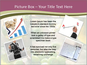 Olive harvest collage PowerPoint Templates - Slide 24