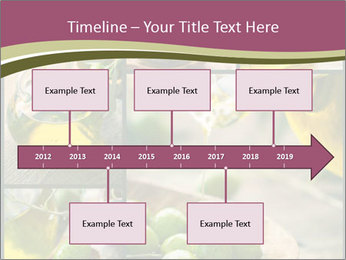 Olive harvest collage PowerPoint Template - Slide 28
