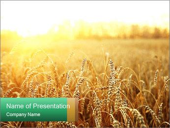 Ripening ears Modèles des présentations  PowerPoint