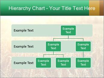 Ripening ears PowerPoint Templates - Slide 67