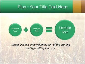 Ripening ears PowerPoint Templates - Slide 75
