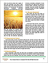 0000091445 Word Template - Page 4