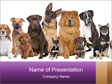 Group of twelve dogs PowerPoint Templates