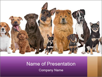 Group of twelve dogs PowerPoint Template - Slide 1