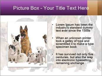 Group of twelve dogs PowerPoint Templates - Slide 13