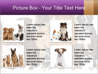 Group of twelve dogs PowerPoint Templates - Slide 14