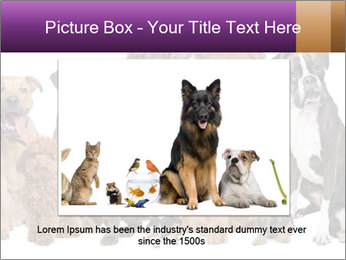Group of twelve dogs PowerPoint Template - Slide 15