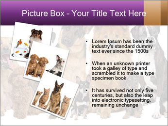 Group of twelve dogs PowerPoint Templates - Slide 17