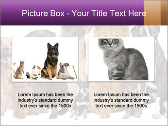 Group of twelve dogs PowerPoint Template - Slide 18