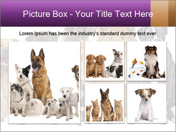 Group of twelve dogs PowerPoint Templates - Slide 19