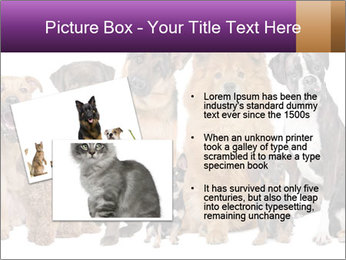 Group of twelve dogs PowerPoint Templates - Slide 20