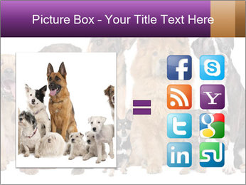 Group of twelve dogs PowerPoint Templates - Slide 21