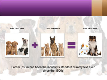 Group of twelve dogs PowerPoint Template - Slide 22