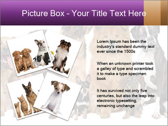 Group of twelve dogs PowerPoint Template - Slide 23