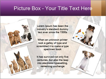 Group of twelve dogs PowerPoint Templates - Slide 24