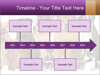 Group of twelve dogs PowerPoint Template - Slide 28