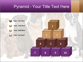 Group of twelve dogs PowerPoint Templates - Slide 31