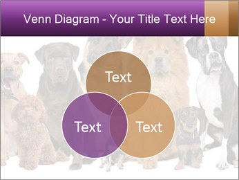 Group of twelve dogs PowerPoint Templates - Slide 33
