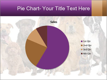 Group of twelve dogs PowerPoint Template - Slide 36