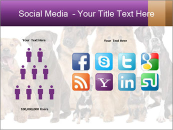 Group of twelve dogs PowerPoint Template - Slide 5