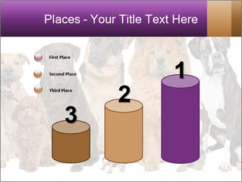 Group of twelve dogs PowerPoint Templates - Slide 65