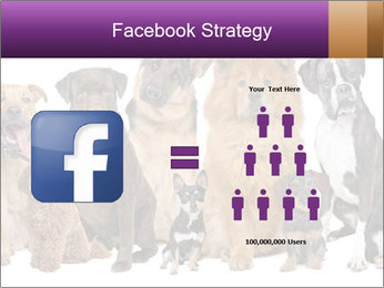 Group of twelve dogs PowerPoint Template - Slide 7