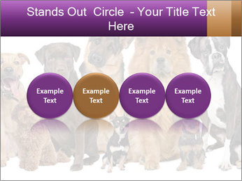 Group of twelve dogs PowerPoint Templates - Slide 76