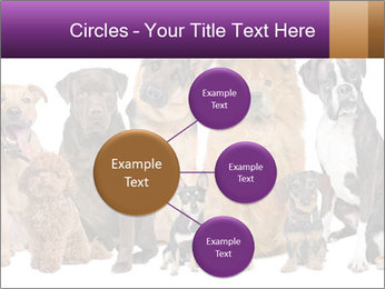 Group of twelve dogs PowerPoint Template - Slide 79