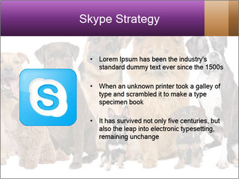 Group of twelve dogs PowerPoint Template - Slide 8