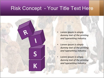 Group of twelve dogs PowerPoint Template - Slide 81