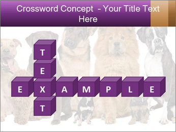 Group of twelve dogs PowerPoint Template - Slide 82