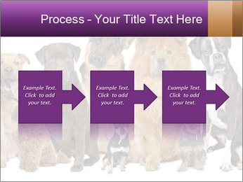 Group of twelve dogs PowerPoint Template - Slide 88