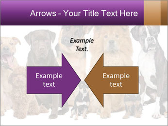 Group of twelve dogs PowerPoint Template - Slide 90