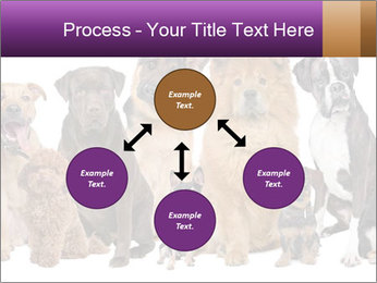 Group of twelve dogs PowerPoint Template - Slide 91