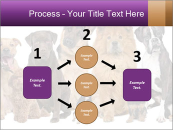 Group of twelve dogs PowerPoint Template - Slide 92