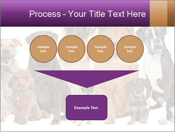 Group of twelve dogs PowerPoint Template - Slide 93