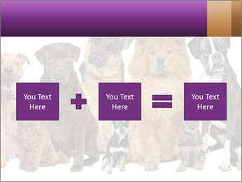 Group of twelve dogs PowerPoint Template - Slide 95