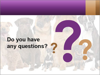 Group of twelve dogs PowerPoint Templates - Slide 96