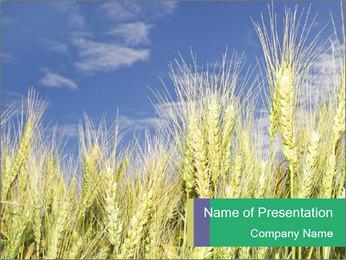 Wheat ears PowerPoint Template - Slide 1