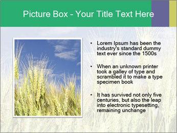 Wheat ears PowerPoint Template - Slide 13