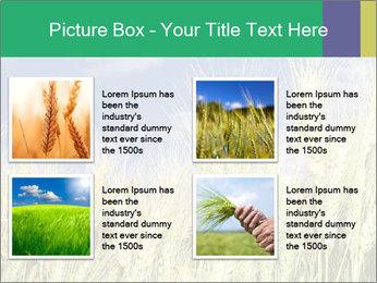 Wheat ears PowerPoint Template - Slide 14