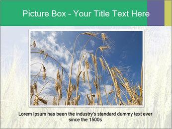 Wheat ears PowerPoint Template - Slide 15