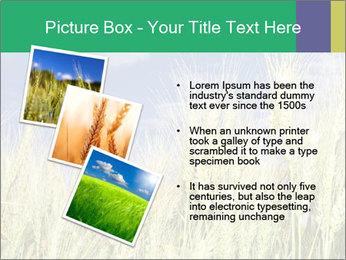 Wheat ears PowerPoint Template - Slide 17