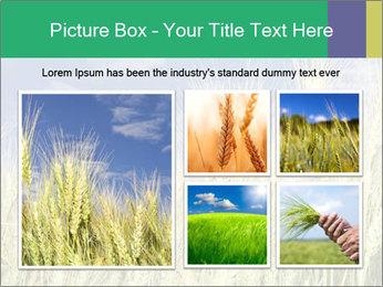 Wheat ears PowerPoint Template - Slide 19